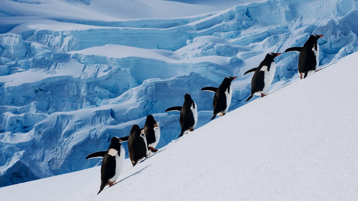 New servers in a new continent — Antarctica!